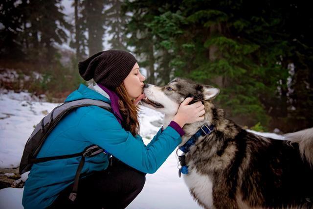 Terapia: cão husky 'salva' dona de decepção em relacionamento