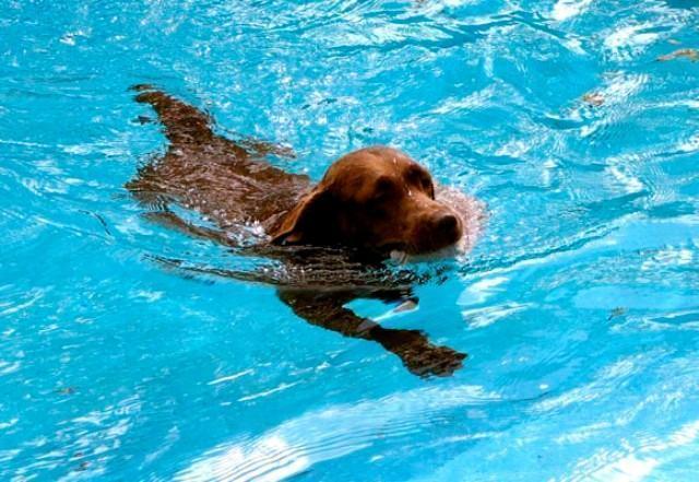 O que fazer em afogamento de cachorros?