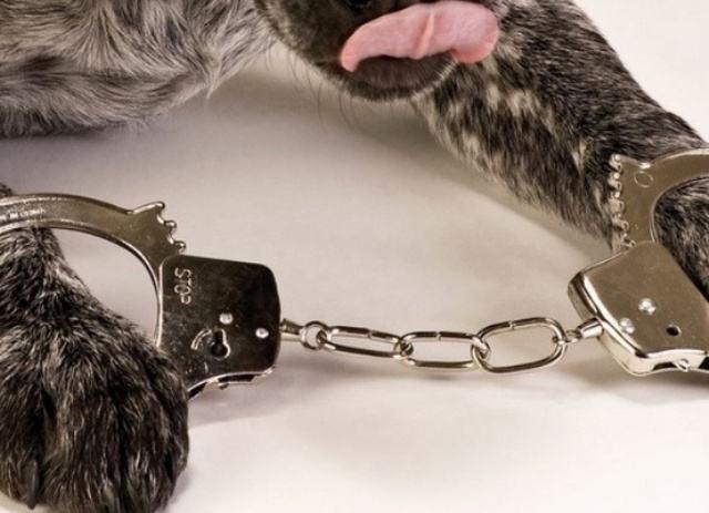 Pep the Black: cão condenado a prisão perpétua