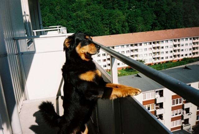 Posso ter um cachorro no apartamento?