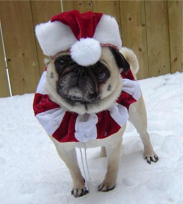 pug-na-neve-fantasia-natalina