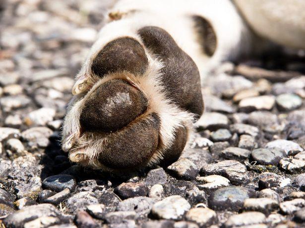 Saiba como cuidar de cachorros com cistos nos dedos