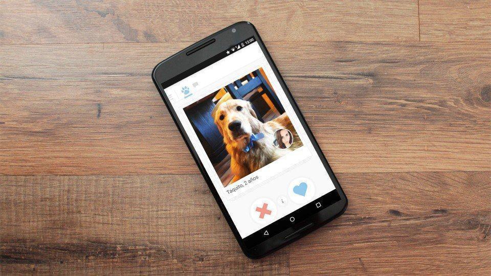 Tindog: o aplicativo Tinder para cachorros
