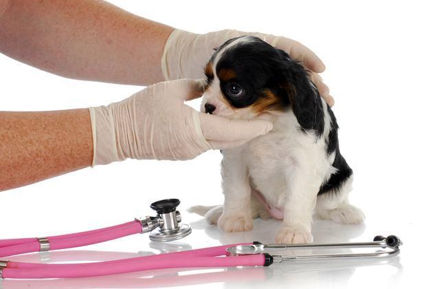 Tratamento para crises de asma em cães