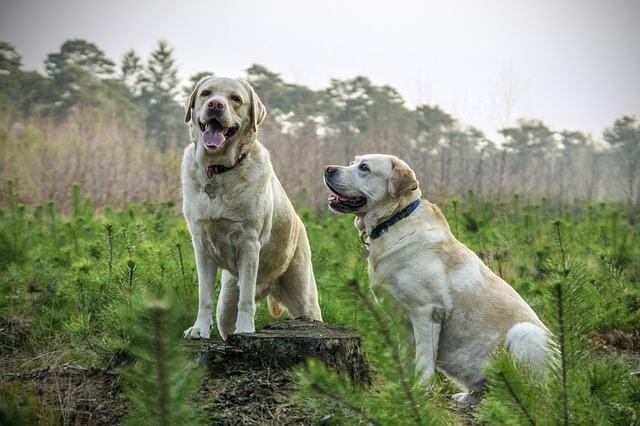 50 frases lindas sobre cachorros