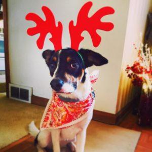 cachorro-rena-bem-vestido-chifres-vermelhos