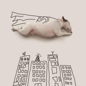 jimmy-bull-terrier-superman