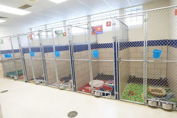 Após ação na Black Friday, abrigo tem todos os animais adotados
