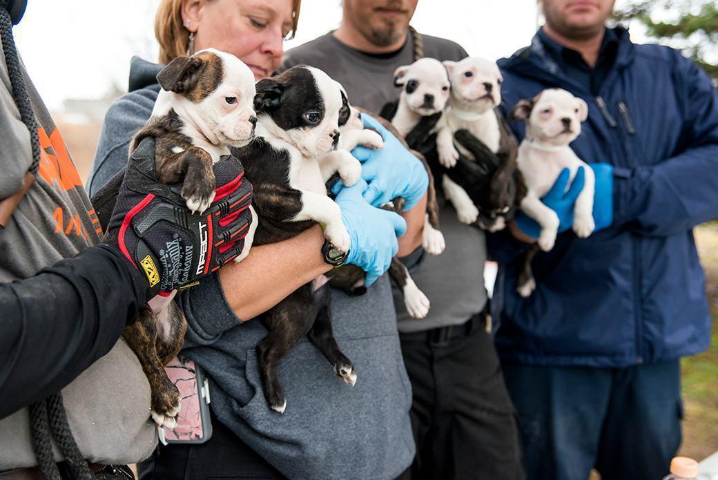 filhotes-resgatados-abrigo-ilegal