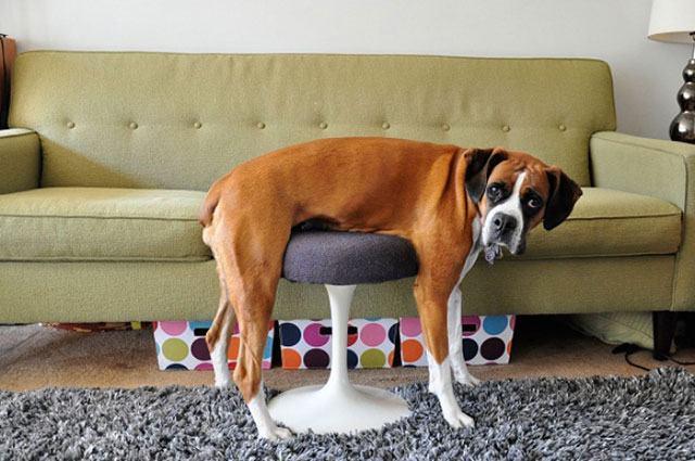 cão-sentado-do-jeito-errado