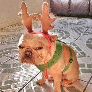 cãozinho-vestido-de-rena-mal-humorado