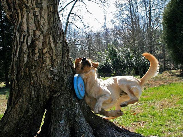 cachorro-batendo-em-arvore
