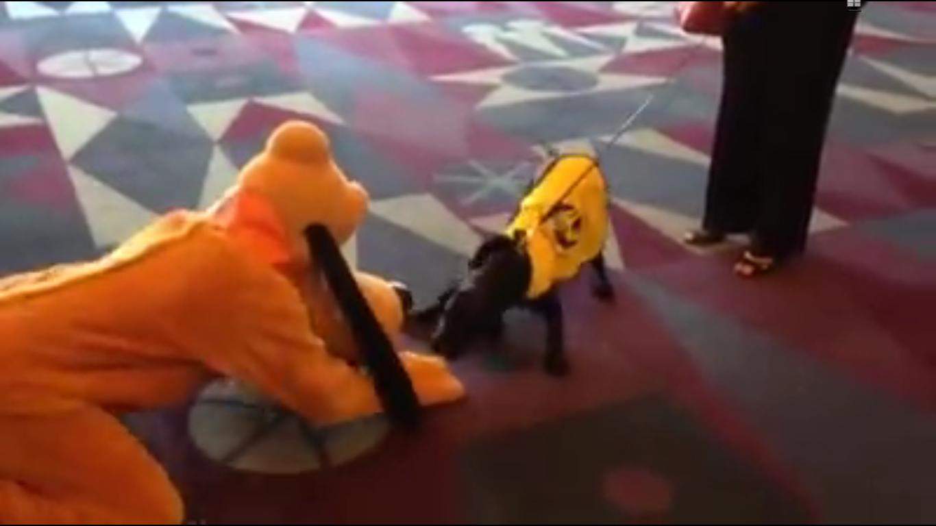 cachorro-conhece-idolo-pluto-cao-do-mickey