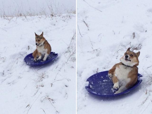 cachorro-em-treno-de-neve