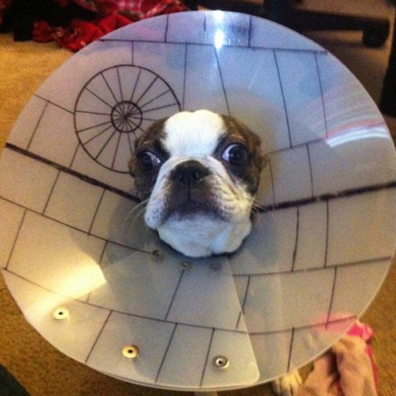 cachorro-estrela-da-morte
