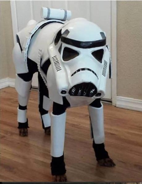 cachorro-fantasiado-stormtrooper