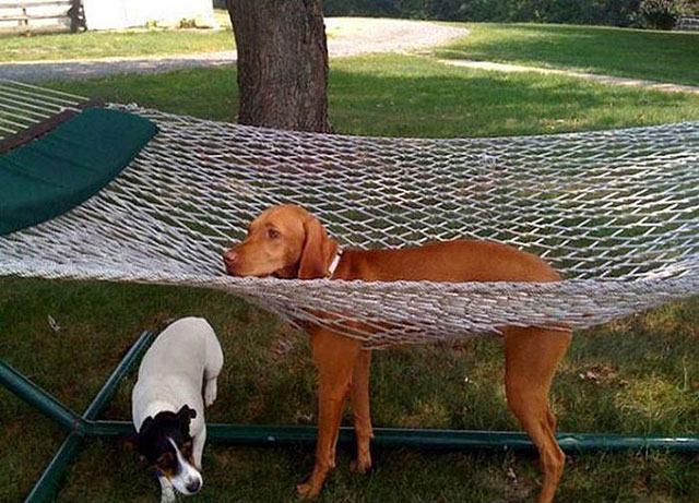 cachorro-preso-em-rede
