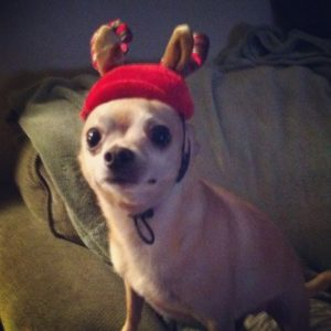 cachorro-rena-assustado-decepcionado