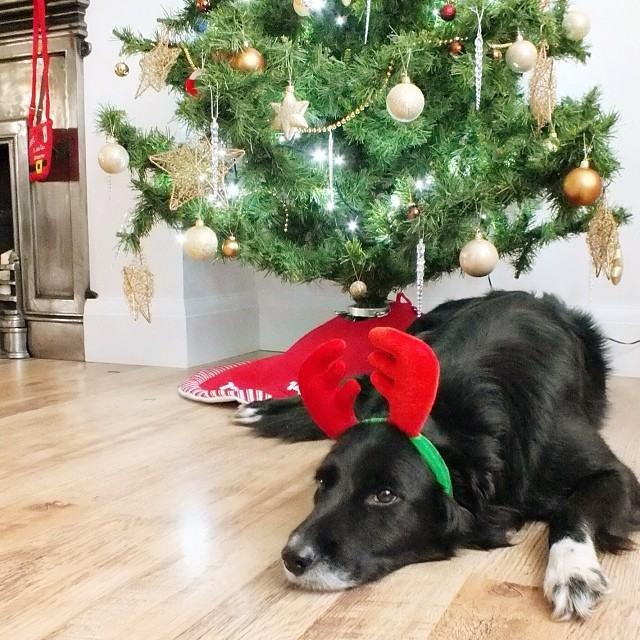 cachorro-rena-fofo-deitado-sob-árvore