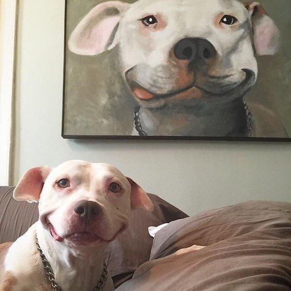cachorro-vira-hit-na-web-por-posar-para-foto-igual-a-quadro
