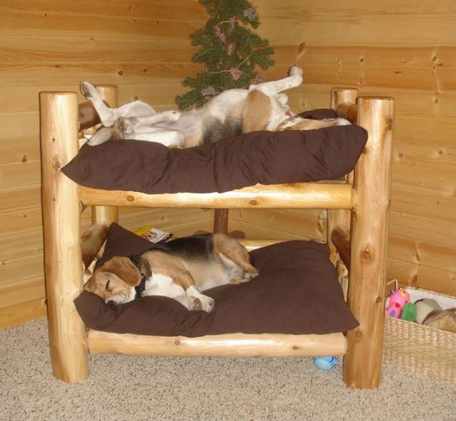 10 camas criativas para caes clube para cachorros for Bed frame with dog kennel