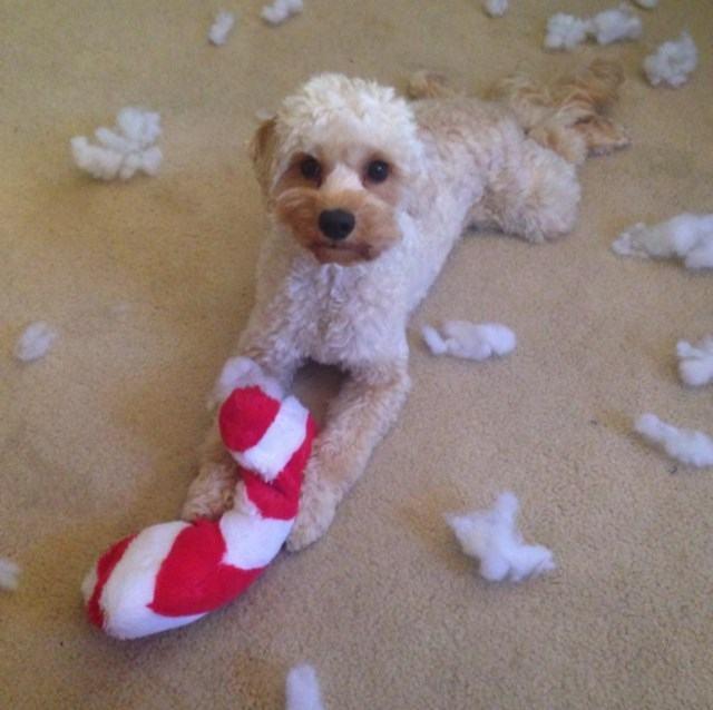 cao-destruiu-decoração-de-natal