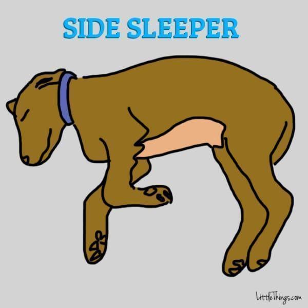 cao-dormindo-de-lado