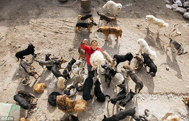 Chinês abre mão de fortuna para salvar cães de matadouro