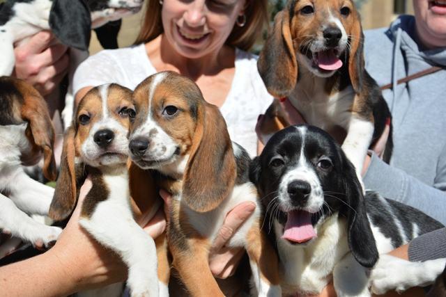 Cientistas criam primeiros cachorros de proveta