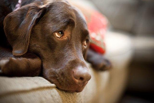 Descubra tudo sobre o câncer de útero em cadelas