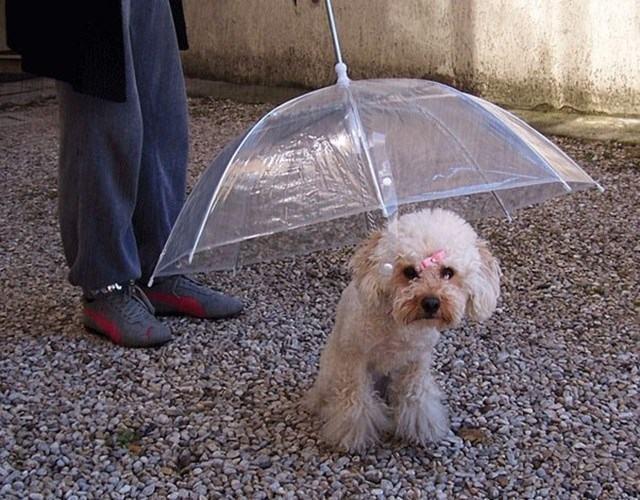 guarda-chuva-canino
