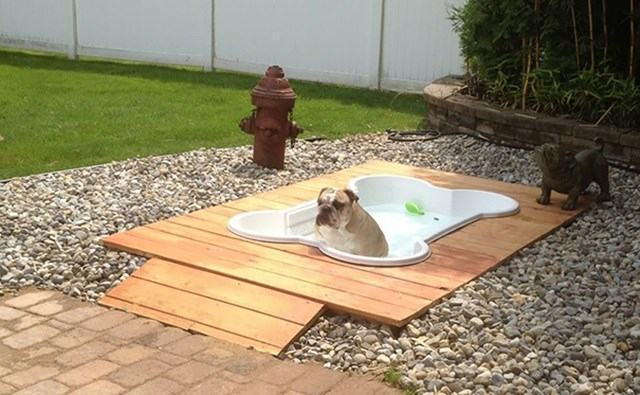 piscina-para-caes