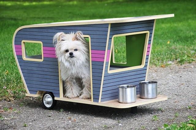 trailer-como-casa-para-dog
