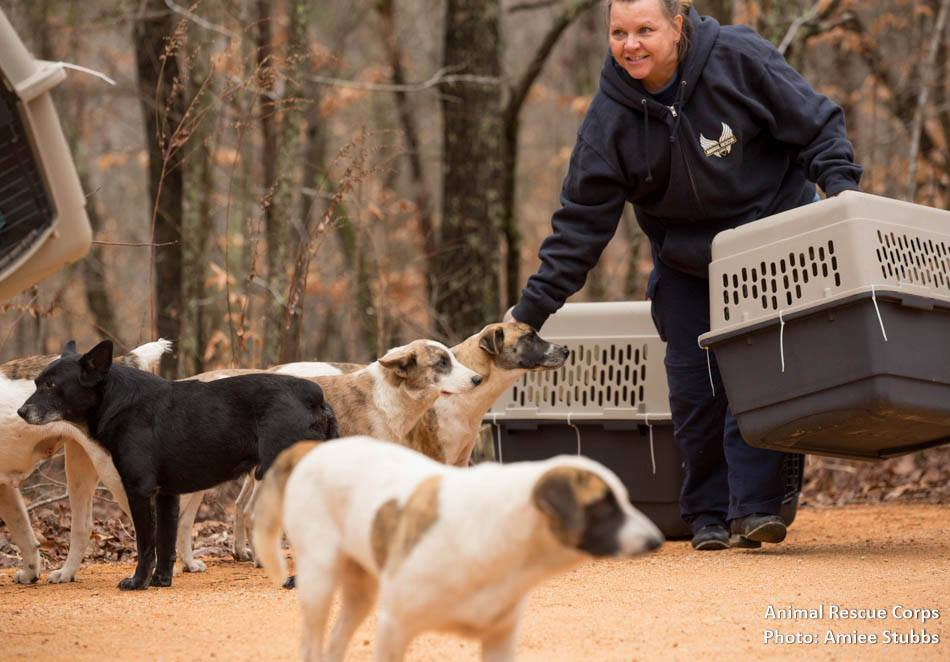 cachorros-resgatados-em-parque-no-tenessee