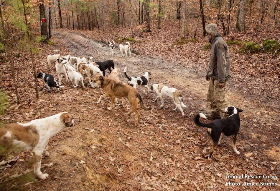 senhor-pede-ajuda-para-conseguir-casa-para-seus-31-cachorros