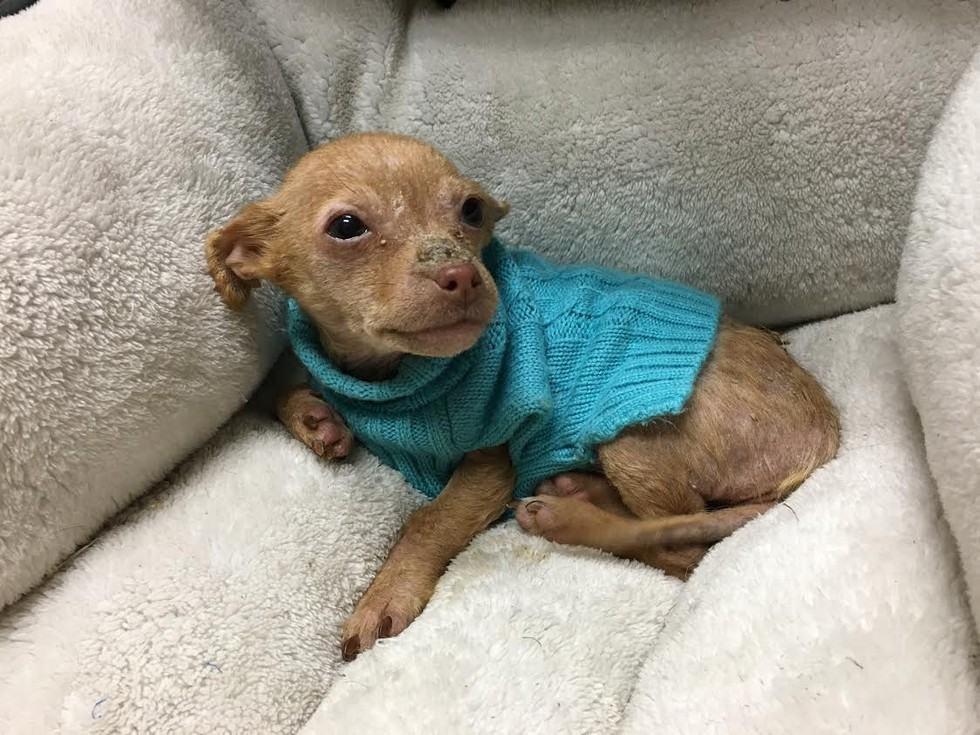 Abandonada perto de lixeira do McDonald's, cadela é resgatada por casal