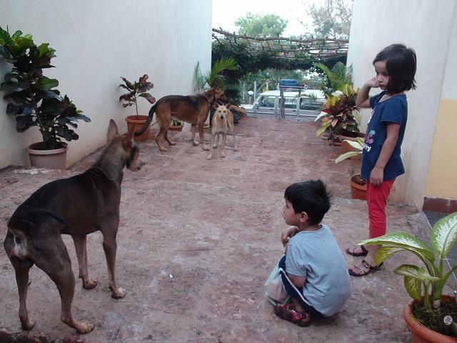 As razões para que as crianças cresçam na companhia de um cão