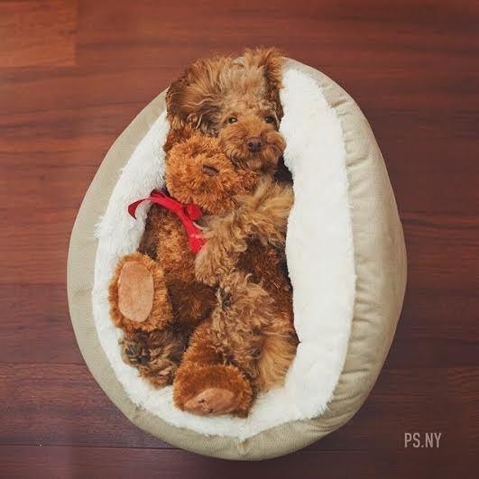 cachorrinho-deitado-em-cama-abraçando-bichinho-de-pelucia