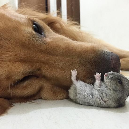 cachorro-abraçando-pequeno-roedor