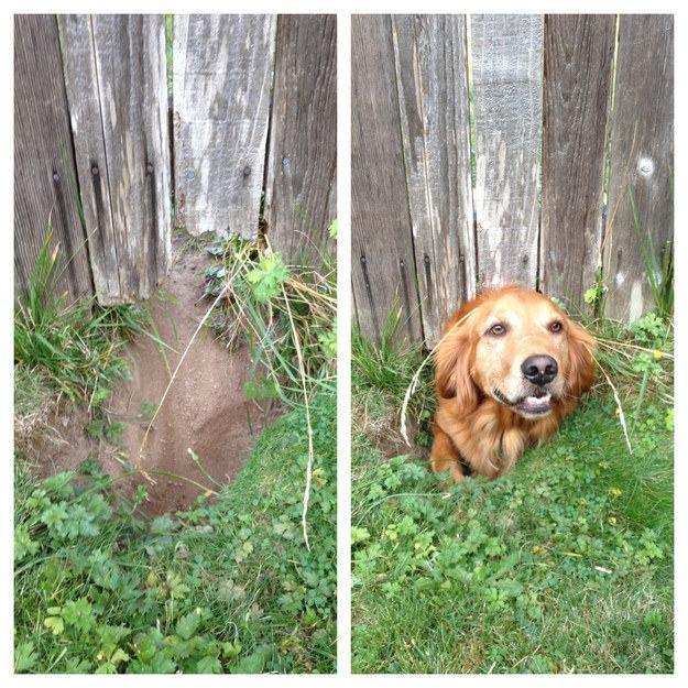 cachorro-cabeça-por-baixo-da-cerca