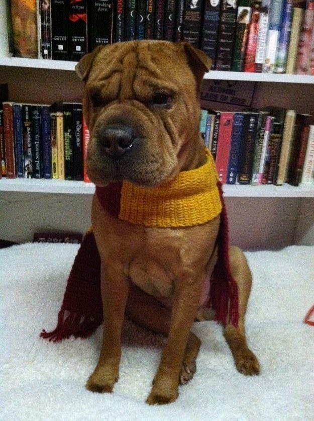 cachorro-com-cachecol-e-livros