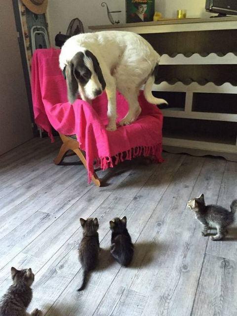 cachorro-com-medo-de-gatos