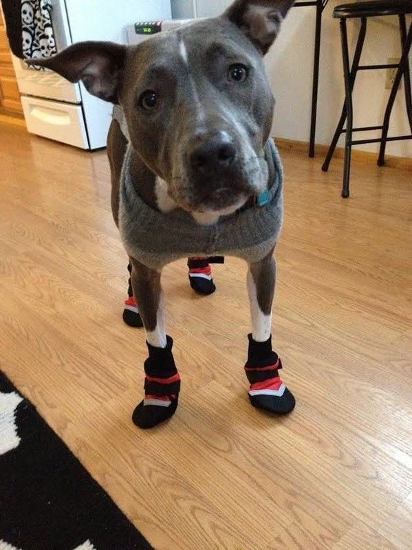 cachorro-com-sapatos