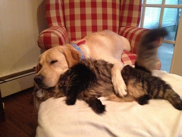 cachorro-e-gato-dormindo-abraçados