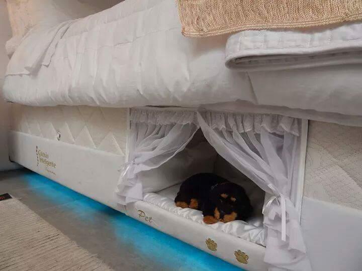 Empresa brasileira cria colchão com minicama embutida para cães