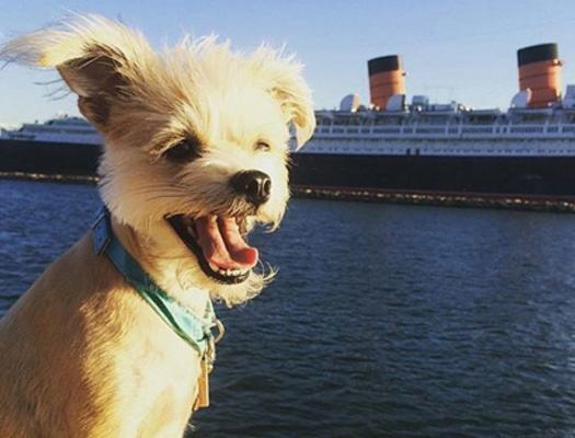 cachorro-indo-em-cruzeiro