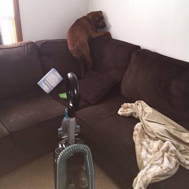 cachorro-medo-sofá