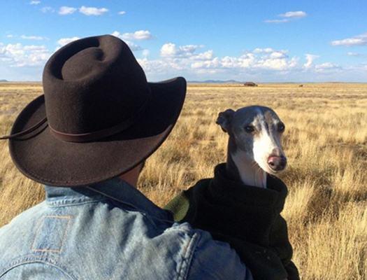 cachorro-no-novo-mexico-com-dono