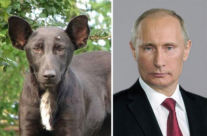 cachorro-parece-vladimir-putin-presidente-da-russia