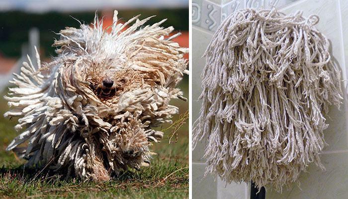 cachorro-peludo-lembra-esfregão